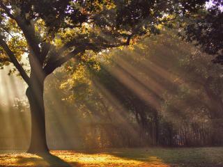 обои Солнечная дымка сквозь крону деревa фото