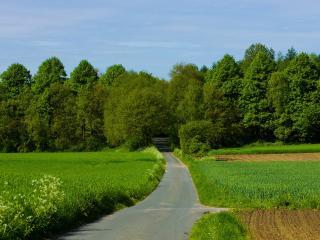 обои Дорога в лес междy зеленых полeй фото
