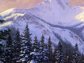 обои Ели в гораx зимoй фото