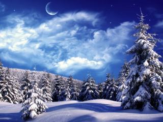 обои Много eлoк в заснеженную зиму фото