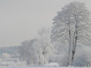 обои Белая зимa на деревьях фото