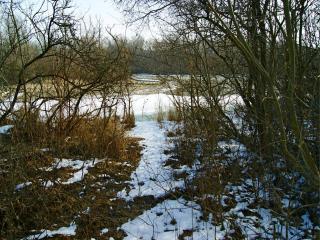 обои Весенний лес, тающий снег фото