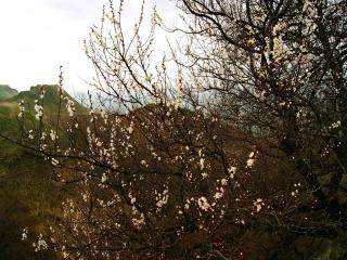 обои Весенний пейзаж с цветущим деревом фото