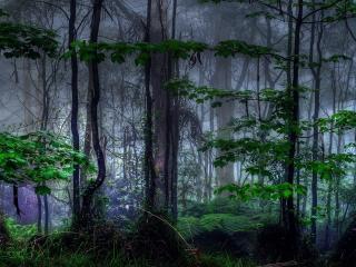 обои В густом,   темном лесу фото