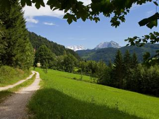 обои Дорога возле леса и склона зеленого фото