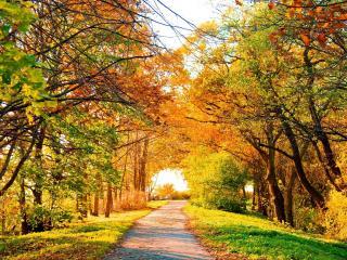 обои Желтый свет от осенних деревьев фото