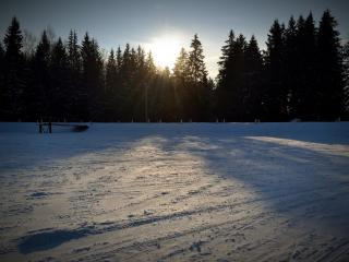 обои Зимний закат за деревьями фото