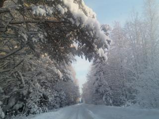 обои Зимняя дорога через лес с большим снегом фото
