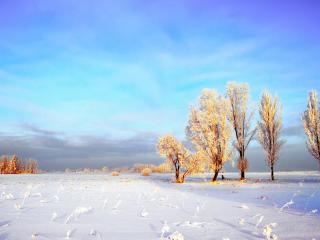 обои Кофейно-белые деревья в зимний день фото