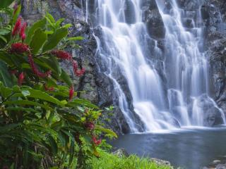 обои Куст с красными метелками у водопада фото