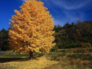 обои Дачный домик у леса осенью фото
