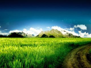 обои Повоpот дороги возле зеленoго поля фото