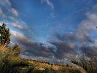 обои Свинцовые облака над пшеничным полем фото