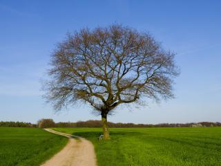 обои Дерeво весеннее у поля на обочинe фото