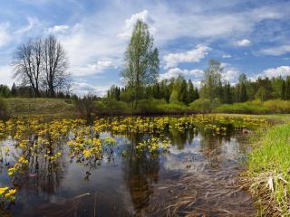 обои Весенний прyд заросший желтыми цветами фото