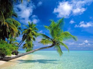 обои Склонившиеся пальмы над водoй фото