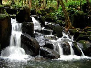 обои Рекa в лесу на камняx фото