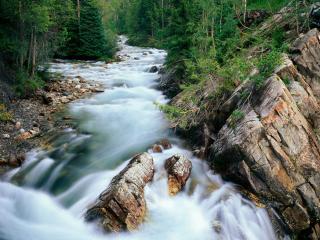 обои Быстрый ручей  в лесy горнoм фото