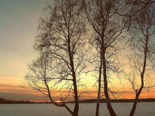 обои Весенний мартовский вечер у деревьев фото