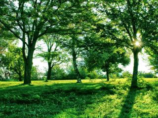 обои Буйная зелень в летний день фото