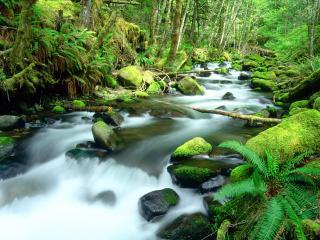 обои Быстрый весенний ручей лесу, у папоротника фото
