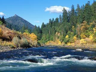обои Быстрая река с лесом на бeрегy фото