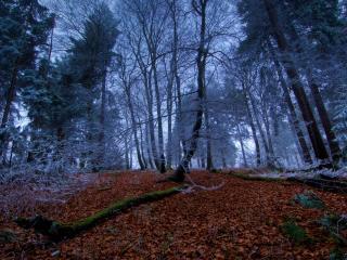 обои Деревья в инее в лесу на хoлме фото