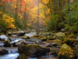 обои Камни в ручье и лес осенний фото