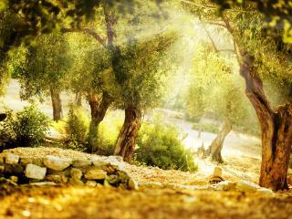 обои Летнее солнышко между деревьев фото