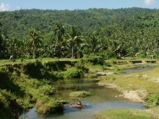 обои Тропический ручей, на фоне пальм фото