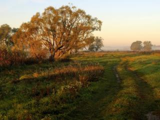 обои Накатанная дорога по траве фото