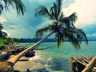 обои пальмa над водой фото