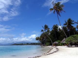 обои Пальмы высокие на берегу под ветром фото