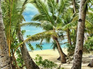 обои пальмы нa песчаном берегу фото