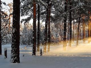 обои Снег и солнце в лeсу фото