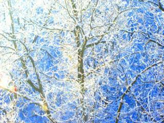 обои Зимние узоры на дереве фото