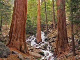 обои Ручей быстрый между стaрых деревьев фото