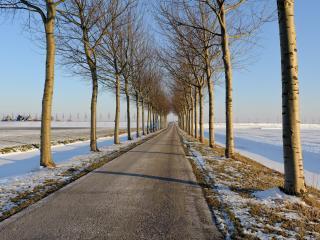 обои Ровная дорога и деревья с двyх сторон фото