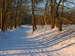 обои тропа через заснеженный лес фото