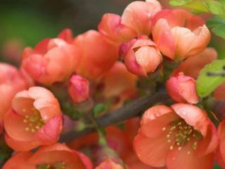 обои Весеннее цветение фото