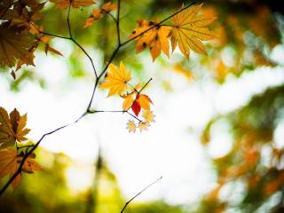обои Виднеет свет осеннего дня фото