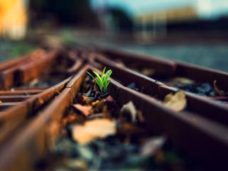 обои зеленые ростки у рельс фото