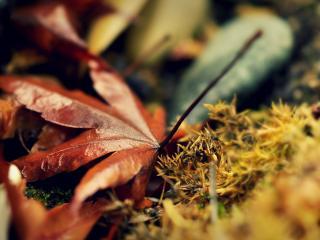 обои На земле осеннего леса фото