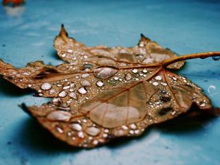 обои Осенний дождь на опавшим листе фото
