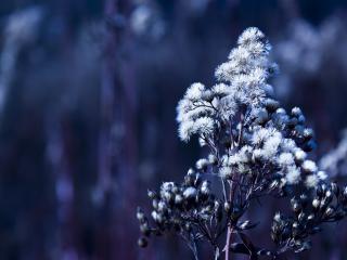 обои Цветение растения фото
