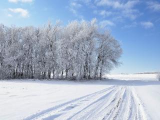 обои Зимняя полевая дорога фото