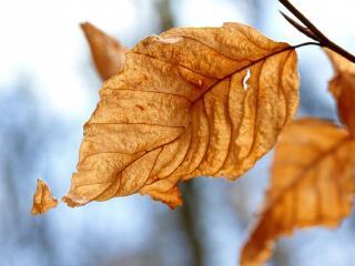 обои Последняя неопавшая желтая листва на ветрy фото