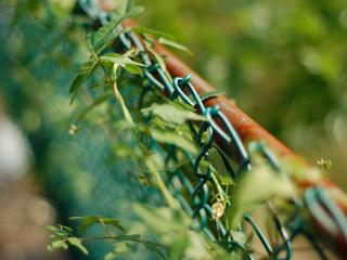 обои Растет зелень у сетчастого забора фото