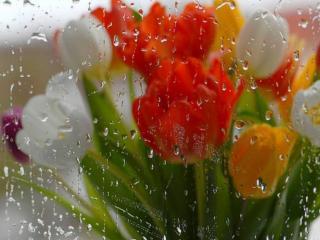 обои Весенний дождь фото