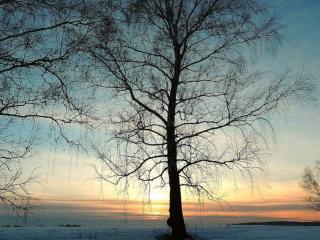 обои Нежные краски заката и весеннее дерево фото